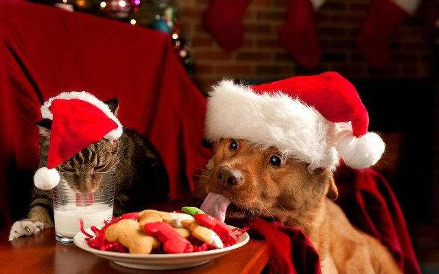 christmas-cat-and-dog